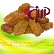 golden raisins bulk