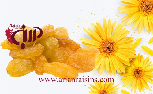golden raisins supplier in iran