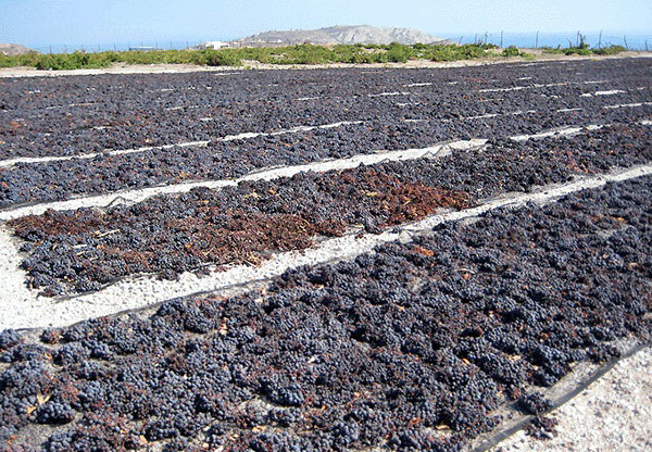 How the raisins are dried