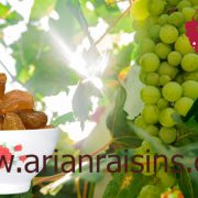 golden raisins wholesale