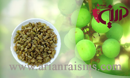 wholesale bulk raisin suppliers in iran